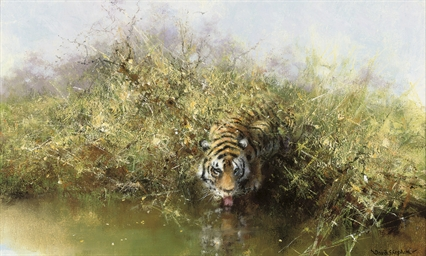 Tiger at the waters edge