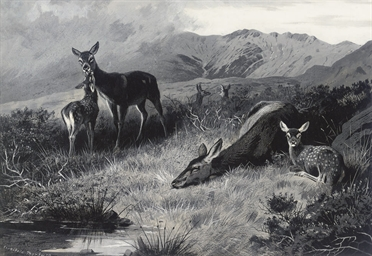 Hinds with fawns at rest
