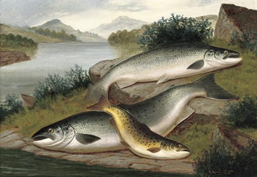 Salmon and trout of Loch Awe