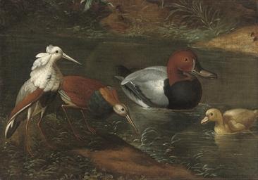 Ducks and waders watering