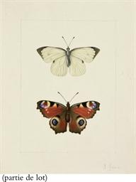 Un papillon blanc avec les ext