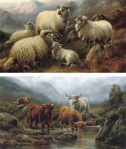 Sheep in a highland landscape; and Highland cattle watering