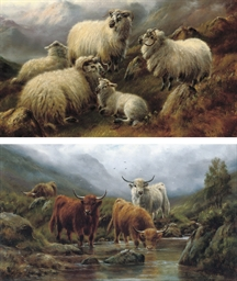 Sheep in a highland landscape;