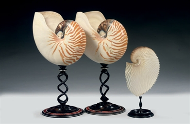 A PAIR OF NAUTILUS SHELLS 'NAU