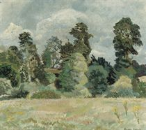 A Summer Meadow