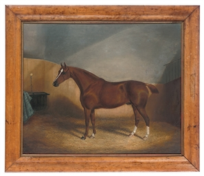 A bay hunter in his stall; and