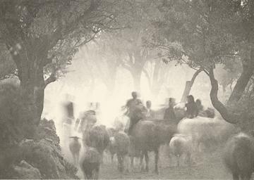Cretan Landscape, 1964