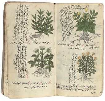 A TREATISE ON HERBAL MEDICINE AND OTHER WORKS
