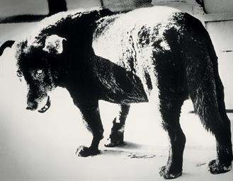 Stray Dog, 1971