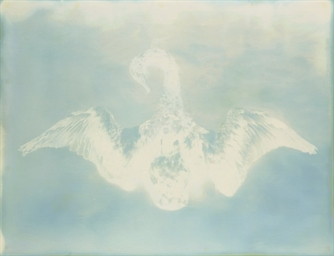 Untitled (Swan), from My Ghost