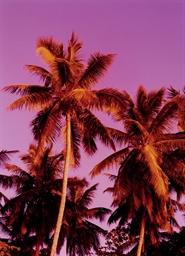 Pink Palm, 2009