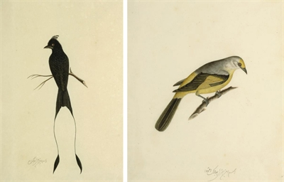 FOUR BIRD STUDIES, COMPANY SCH