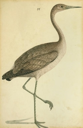 A WATERCOLOUR OF A CRANE, COMP