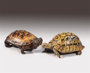TWO SMALL TURTLES