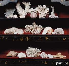 A COLLECTION OF VARIOUS CORALS