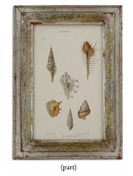 FOURTEEN LITHOGRAPHS OF SHELLS