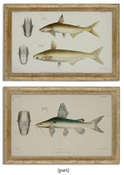 TWELVE CHROMOLITHOGRAPHS OF FI