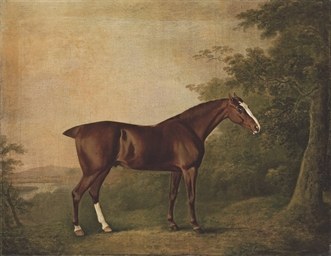 A chestnut hunter in a landsca