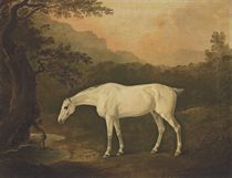 A grey hunter in a wooded landscape by a stream