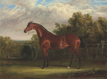 Negotiator, a bay racehorse in
