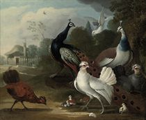 A peacock, a hen, fowl and other birds in a landscape