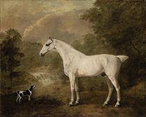 A flea-bitten grey hunter and a terrier in a river landscape