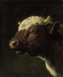 A bull's head