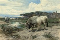 Long-horned cattle in the Roman Campagna