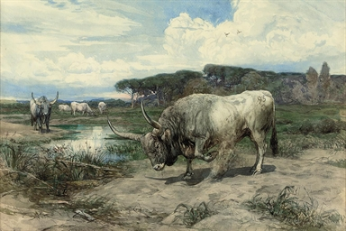 Long-horned cattle in the Roma
