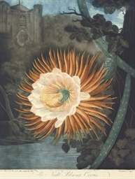 The Night-Blowing Cereus, by D