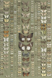 Moths: Three hundred and seven