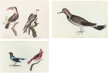Sixteen studies of birds, the