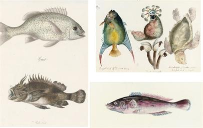 Thirteen studies of fish, crus