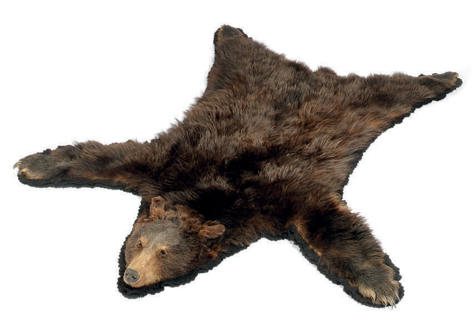bear skin rug a taxidermy mounted brown skin rug mid 20th century 31186