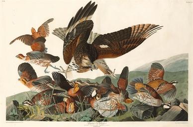 Virginian Partridge (Plate LXX