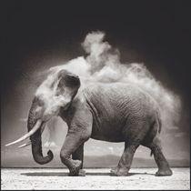 Elephant With Exploding Dust, 2004