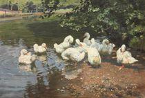 Am Ententeiche: Ducks in a Pont