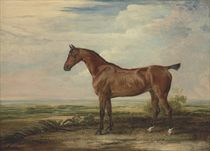 Worthy, a bay hunter, in an extensive landscape