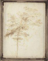 A study of a tree