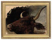 Head study of a bull