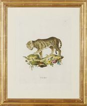 [African Animals]: Nine Plates