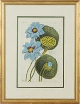[Plant studies]: Eight Plates