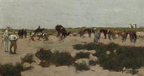 Wild race horse