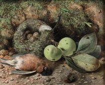 Fruit, a nest and game on a forest floor