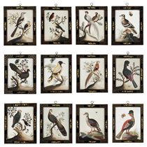 A SET OF TWELVE IRISH GEORGE II EMBOSSED BIRD PICTURES