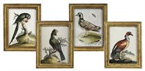 A SET OF FOUR IRISH GEORGE II EMBOSSED BIRD PICTURES