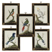 A SET OF FIVE GEORGE III EMBOSSED BIRD PICTURES