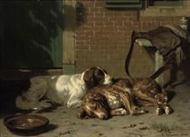 English Springer Spaniels resting after the hunt