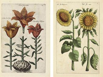 SWEERT, Emanuel (1552-1612).  Florilegium ... tractans de variis floribus et aliis indicis plantis as vivum delineatum in duabus partis et quatuor linguis concinnatum. Frankfurt: A. Kempner, 1612-1614.