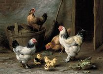 Cockrell, hens and chicks by a barn door